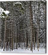 Snowy Forest In Acadia Canvas Print