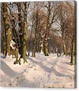 Snowy Forest Road 1908 Canvas Print
