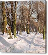 Snowy Forest Road In Sunlight Canvas Print