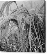 Snowy Grass Canvas Print