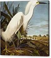 Snowy Heron Or White Egret Canvas Print