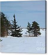 Snowy Hillside With Evergreen Trees And Bluesky Canvas Print