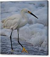 Snowy In The Surf Canvas Print