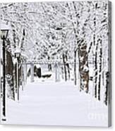 Snowy Lane In Winter Park Canvas Print