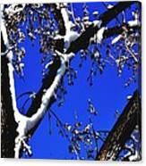 Snowy Limbs 14051 Canvas Print