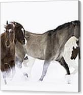 Snowy March II Canvas Print