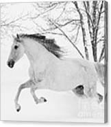 Snowy Mare Leaps Canvas Print