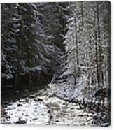 Snowy Oregon Stream Canvas Print