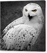 Snowy Owl Calling Canvas Print