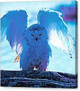 Snowy Owl Drying After Bath Canvas Print
