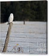 Snowy Owl Landscape Canvas Print