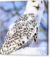 Snowy Owl Look Out Canvas Print