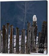 Snowy Owl On A Fence Canvas Print