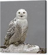 Snowy Owl On An Ice Flow Canvas Print