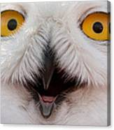 Snowy Owl Up Close And Personal Canvas Print