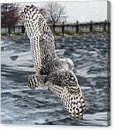 Snowy Owl Wingspan Canvas Print