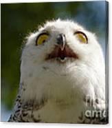Snowy Owl With Big Eyes Canvas Print