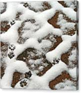 Snowy Path And Paw Prints Canvas Print