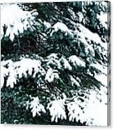 Snowy Pine Canvas Print