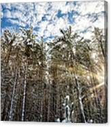 Snowy Pines With Sunflair Canvas Print