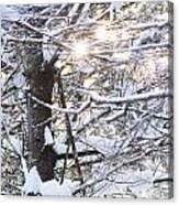 Snowy Sunbursts Canvas Print
