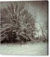 Snowy Treasure Canvas Print