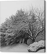 Snowy Trees In Black And White Canvas Print