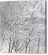 Snowy Trees In Winter Park Canvas Print