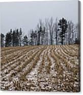 Snowy Winter Cornfields Canvas Print