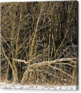 Snowy Winter Forest Canvas Print