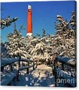 Snowy Woods At Barnegat Light Canvas Print