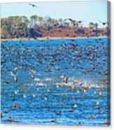 So Many Ducks Canvas Print
