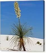 Soap Yucca Canvas Print