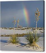 Soaptree Yucca And Rainbow White Sands Canvas Print