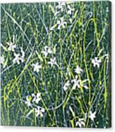 Soapwort Canvas Print