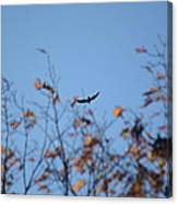 Soaring In Autumn  Canvas Print