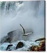 Soaring In The Mist Canvas Print