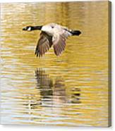 Soaring Over The River Canvas Print