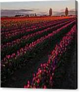 Soaring Spring Colors In Skagit Canvas Print
