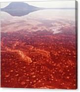 Soda And Algae Formation On Lake Natron Canvas Print