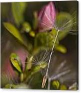 Soft And Delicate Canvas Print