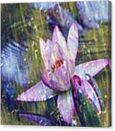 Water Lily Photography Tender Moments  Canvas Print