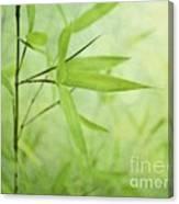 Soft Bamboo Canvas Print