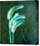 Soft Blue Grass Canvas Print