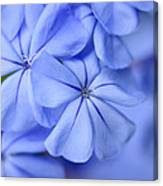 Soft Blue Canvas Print