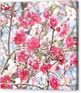 Soft Colors Of Spring Canvas Print