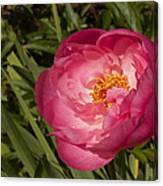Soft Floral Canvas Print