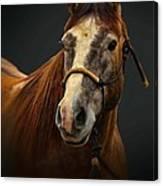 Soft Focus Horse Canvas Print