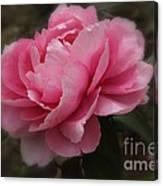 Soft Focus Pink Canvas Print
