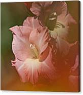 Soft Gladiolus Canvas Print